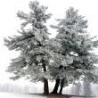 Snowy tree, alone in the snowy field — Stock Photo