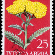 Stamp printed in Yugoslavia shows Moonshine Yarrow — Stock Photo