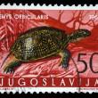 Stamp printed in Yugoslavia shows the European pond turtle — Stock Photo