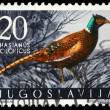 Stock Photo: Stamp printed in Yugoslavishows Pheasant