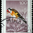Stamp printed in Yugoslavia shows the goldfinch - Stock Photo
