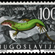 Stamp printed in Yugoslavia shows the European green lizard — Stock Photo