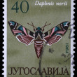 Stamp printed in Yugoslavia shows butterfly — Stock Photo