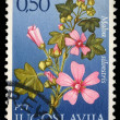 Stock Photo: Stamp printed in Yugoslavishows genus Malva