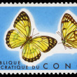 Stamp printed in Congo showing Colotis Protomedia butterfly - Stok fotoraf