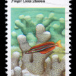 Stamp printed in the USA shows Coral Reefs, Finger Coral, Hawaii — Foto de Stock