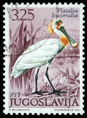 Stamp printed in Yugoslavia shows the Eurasian Spoonbill — Stock Photo