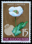 Stamp printed in Yugoslavia shows opium poppy — Stock Photo