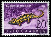 Stamp printed in Yugoslavia shows the Salamander — Stock Photo