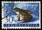 Stamp printed in Yugoslavia shows the Marsh Frog — Stock Photo