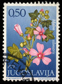 Stamp printed in Yugoslavia shows genus Malva — Stock Photo