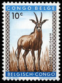 Stamp printed in Congo shows the roan antelope — Stock Photo