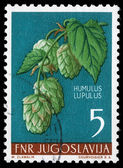 Stamp printed in Yugoslavia shows common hop — Stockfoto