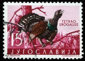 Stamp printed in Yugoslavia shows the Western Capercaillie — Stock Photo