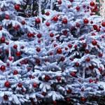 Christmas tree on the streets of Paris — Stock Photo