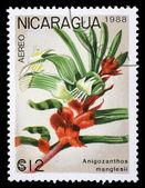 Stämpel tryckt i nicaragua visar gul manglesii — Stockfoto