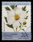 Stamp printed in Grenadines of St. Vincent shows Romneya coulteri flower — Stock Photo