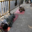 Homeless people sleeping on the footpath of Kolkata — Stock Photo