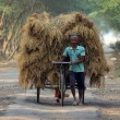 Rickshaw rider transports rice from farm home — Stock Photo #32080041