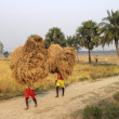 Farmer carries rice from the farm home — Stock Photo #32082133