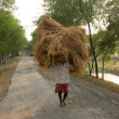 Farmer carries rice from the farm home — Stock Photo #32083071
