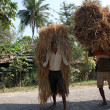Farmer carries rice from the farm home — Stock Photo #32086557