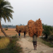 Farmer carries rice from the farm home — Stock Photo #32088463