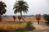 农夫运载从家庭农场水稻 — 图库照片