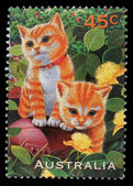 Stamp printed in the Australia shows Kittens, Pets — Stockfoto