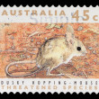 Stamp printed in Australishows Dusky Hopping Mouse — Stock Photo #37706043