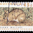 Stock Photo: Stamp printed in Australishows ParmWallaby, Macropus Parma, Marsupial Animal