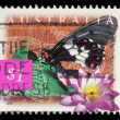 Stamp printed in Australia shows Big Greasy Butterfly and blue lily — Stock Photo #37706633