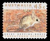 Stamp printed in the Australia shows Dusky Hopping Mouse — Stock Photo