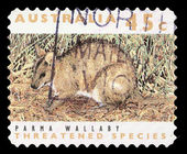 Stamp printed in the Australia shows Parma Wallaby, Macropus Parma, Marsupial Animal — Stock Photo