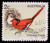 Stamp printed in Australia, shows the Crimson Finch — Stock Photo
