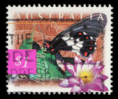 Stamp printed in Australia shows Big Greasy Butterfly and blue lily — Stock Photo
