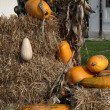 Pumpkins — Stock Photo #39886075