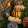 Pumpkins — Stock Photo #39886329