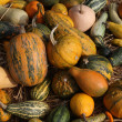 Pumpkins — Stock Photo #39886481