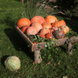 Pumpkins — Stock Photo #39888443