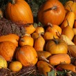 Pumpkins — Stock Photo #39888561