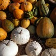 Pumpkins — Stock Photo #39888735