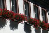 Miltenberg, Bavaria, Germany, well-maintained timbered houses with flower boxes — Stock Photo