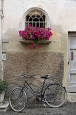 Bicycle and flowers — Stock Photo