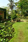 Belo jardim tropical — Foto Stock