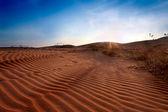 Red Sand Dunes. Sunset — Stock Photo