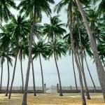 Palm grove on a tropical beach — Stock Photo