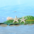 Foto Stock: Starfishes , seshell and leaf on wet sand