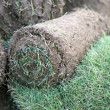 Turf grass rolls — Stock Photo