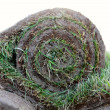 Stock Photo: Turf grass roll